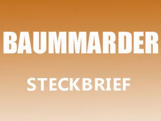 Teaserbild - Baummarder Steckbrief