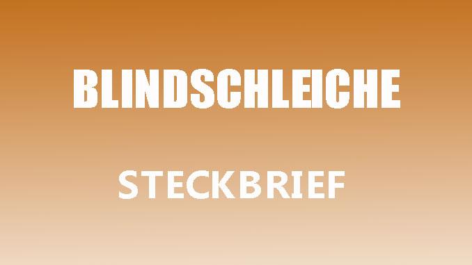 Teaserbild - Blindschleiche Steckbrief