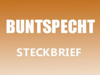 Teaserbild - Buntspecht Steckbrief