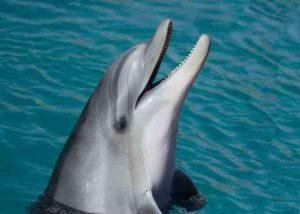 Foto von einem Delfin