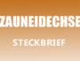 Zauneidechse Steckbrief